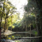 Bosque - Clube de Campo Caco Velho - Espírito Santo do Pinhal-SP
